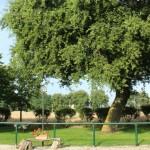 Giardino Quercia Estate