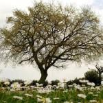 Giardino Quercia Primavera