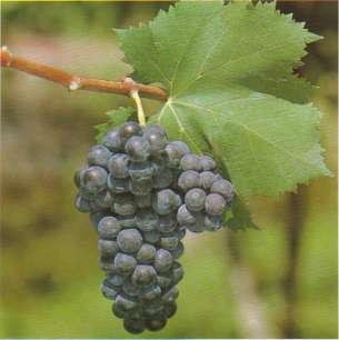 Enoturismo Vini e vitigni d Abruzzo