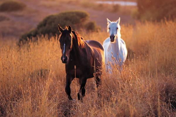 Turismo equestre, una vacanza in Abruzzo a cavallo