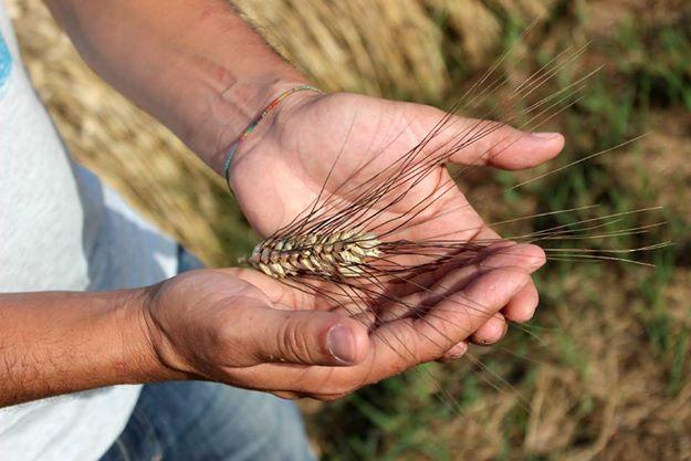 Una lunga tradizione come Agriturismo